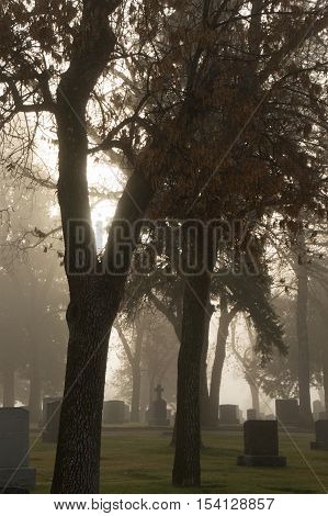 Backlit Photo of Old Headstones and Deciduous Trees at a Cemetery on a Foggy Morning