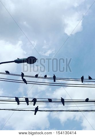 A birds holding on wire with clear sky background.