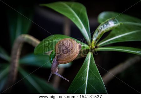 The little snail is moving slowly. backgroung