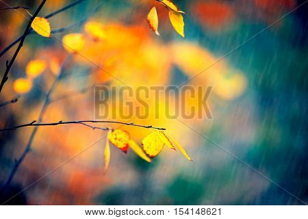 Autumn background, forest with rain, fall. Raining. Beautiful Autumnal park. Beauty nature scene. Rainy weather.
