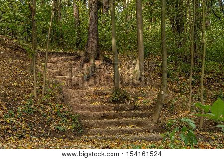 Stairs Dug Earth In Autumn