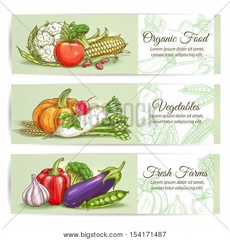 Organic fresh farm vegetables. Vector sketch cauliflower, broccoli, corn, tomato, pumpkin, daikon radish, asparagus, wheat, garlic, eggplant, pepper pea Vegetarian vegetable products design for grocery store food market