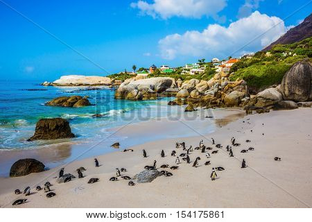 The sandy beach on the Atlantic coast of Africa. Boulders Penguin Colony in the Table Mountain National Park. African black-white penguins. The concept of  ecotourism