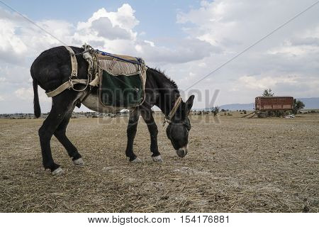 a donkey feeding on meadow in the countryside