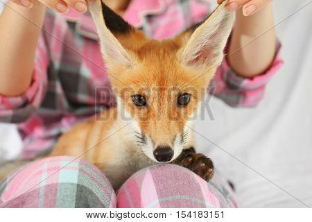 Woman holding little fox cub, close up