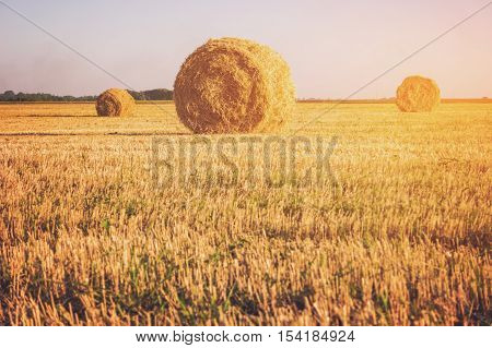 Field with bales of straw. Hay stacks and clear sky. Peace and labor. Homeland misses you.