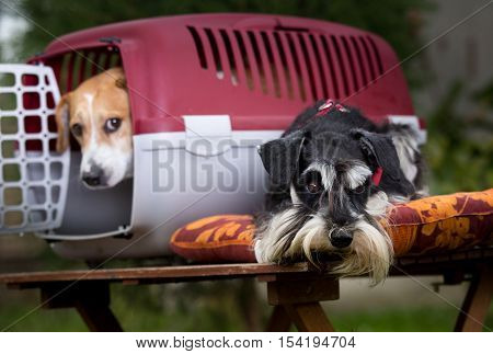 Two Dogs With Carrier