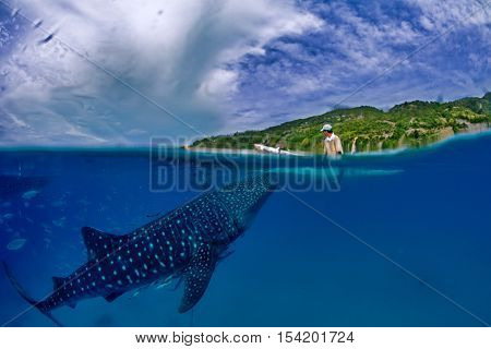 Whale shark and fisherman, split underwater photo