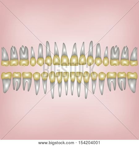 3D a number of gold dental crowns with the roots for a dental clinic or lab vector on white