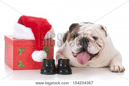 christmas dog with present on white background