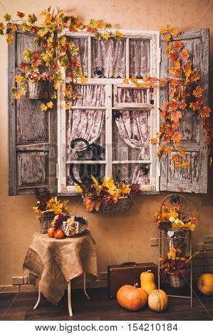Autumn decorated patio. Vintage window shutters entwined with yellow leaves painted black cat and spiders looks out of the window. Smiling pumpkins lying at the floor.