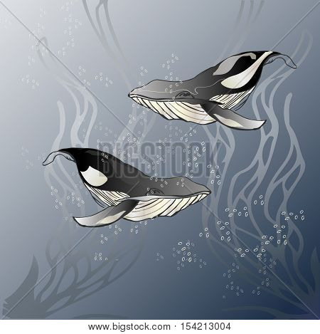Two whales on a blue background vector illustration. Vector illustration zentangle sea world with whales