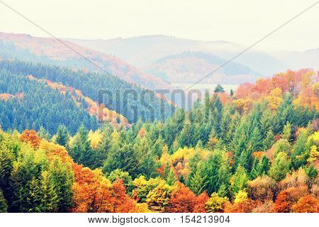 Autumn landscape with colorful fall trees. Top view aerial. Fall nature background