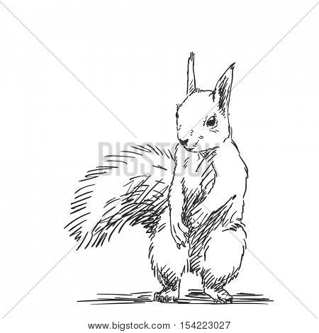 Sketch of squirrel Hand drawn vector illustration