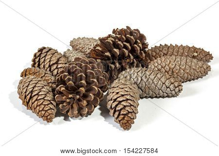 Natural Brown Pine Cone Patterns And Textures