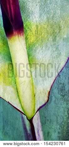Close up of green canna Lily leaf with stem
