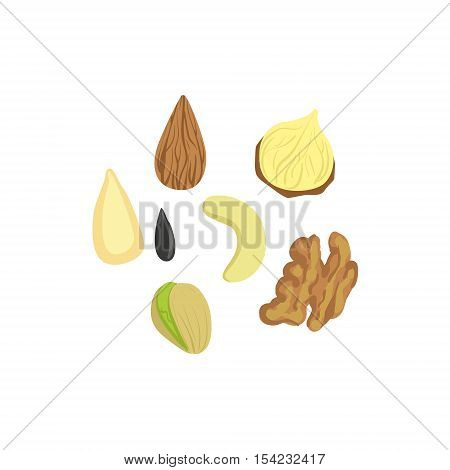 Nuts Product Rich In Folic Acid. Simple Colorful Flat Vector Illustration On White Background.