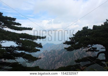 Trees with mountains on the background in Huangshan (Yellow mountains), Anhui province, China
