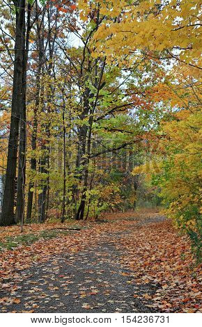 A wooded path in autumn with fallen leaves