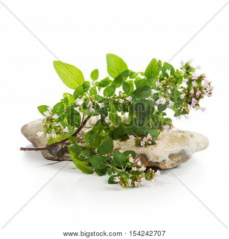 Blooming marjoram sprig and stone on white background. Herb garden concept