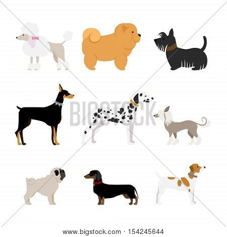 Isolated dogs set on white background. Beautiful and smart dogs as dalmatian, doberman, pug and more.