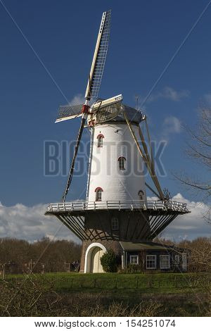 White windmill in Veere standing on the dyke in the winter sunlight.