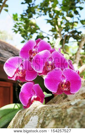 beautiful violet orchid flowers - Stock Photo