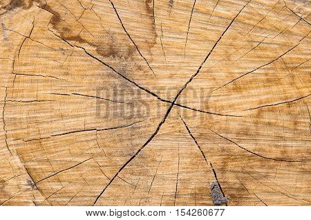 Tree stump background texture - Stock Photo