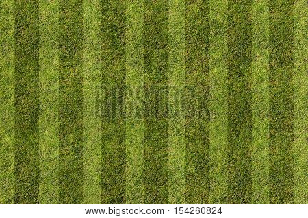 Green Grass. Textures and backgrounds - Stock Photo