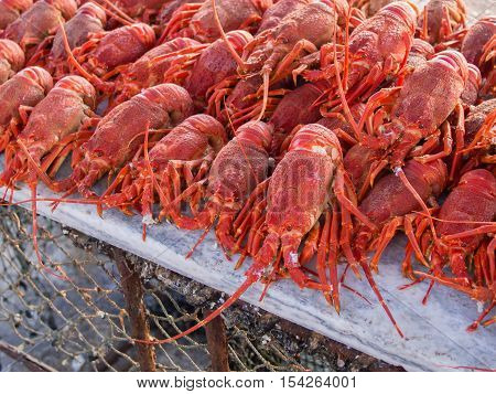 Bright red rock lobsters ready to be grilled in an outdoor sea food and fish restaurant in Lambert's Bay, South Africa. There they are refered to as crayfish and a sought after delicasse.