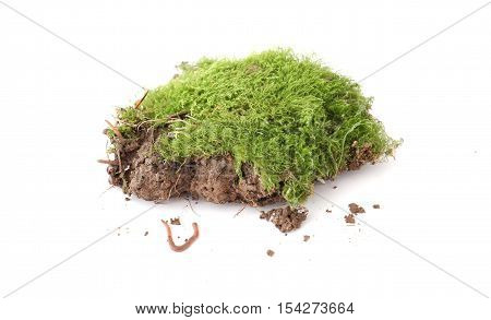 picture of a Earth worm and piece of soil with moss