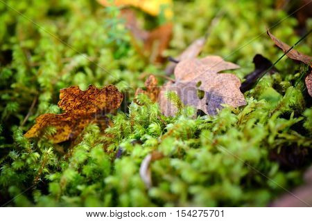 Moss, Leaf On Moss, Moss Autumn, Forest Moss, The Wild Nature, Close Up