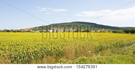 Summer landscape - village with orange tiled roofs near field with sunflowers and little hills, recorded in Kraynevo, Bulgaria.