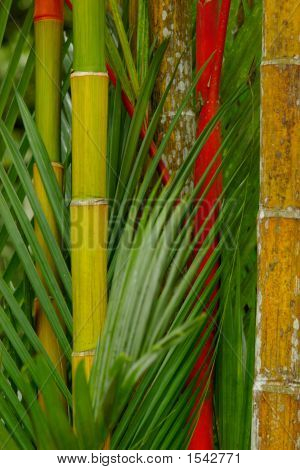 Big Colored Bamboo