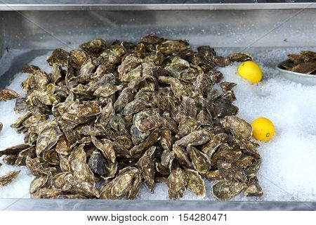 A large tray of Oysters on sale in the Kent coastal resort of Whitstable