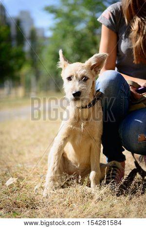 Happy Red Puppy Dog