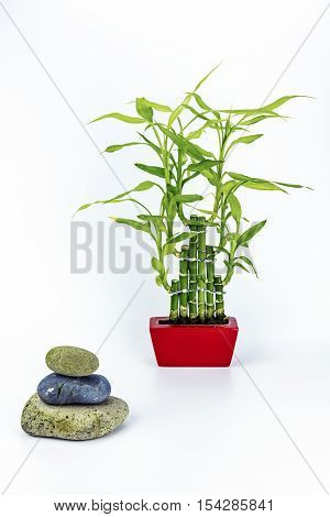 View of a bamboo plant and three balancing stones on   a white background