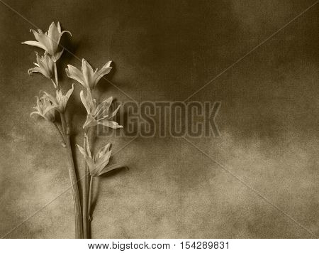Flowers on dark background - condolence card