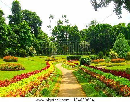 Royal Botanical garden Peradeniya at Sri Lanka