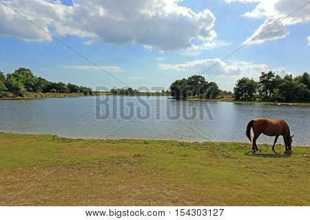 The countryside around Hatchet Pond in the New Forest