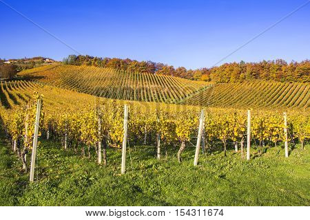 Beautiful vineyard Autumn Vineyards landscape with colorful leaves