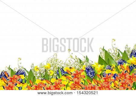 Beautiful flowers isolated on white background. summer