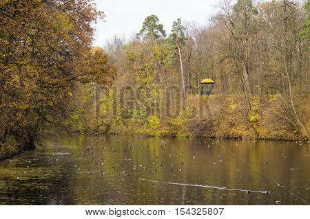 Beautiful autumn lake with ducks and house on the lake shore