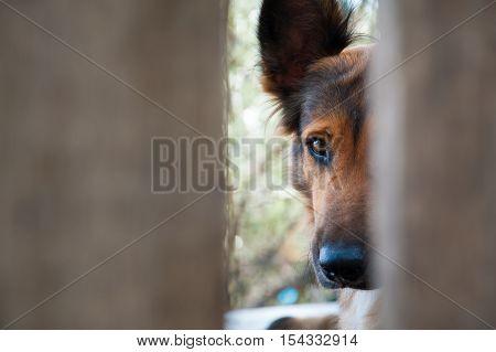 Inside A Dog Refuge