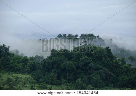 Forest In Thailand