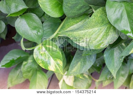 Green leaves with day light stock photo