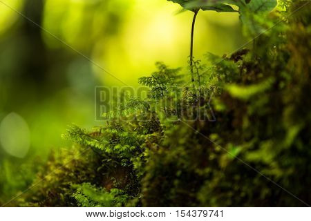 Thailand tropical forest jungle, dot inthanon, Chiangmai, Thailand