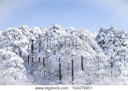 snow scene on huangshan mountain