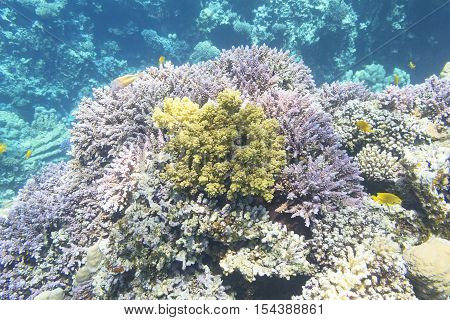 Coral reef with great hard corals at the bottom of tropical sea underwater