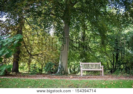 Bench At The Park Cambridge